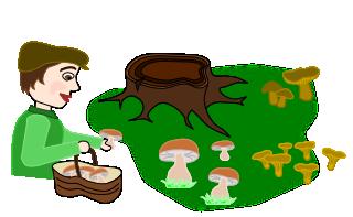 Dessin de mycologue qui ramasse des champignon dans les bois.